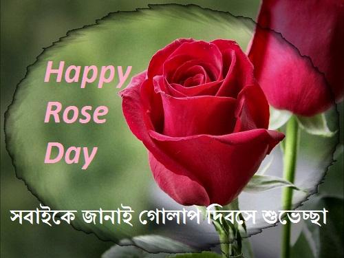 happy rose day bangla pic