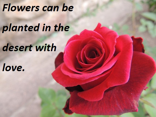 love quote with flower images